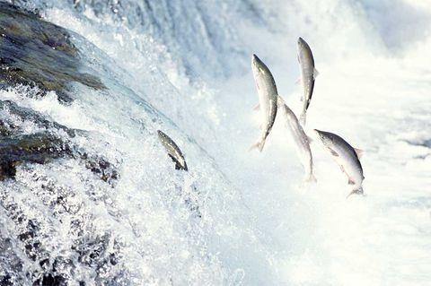 Water, Geological phenomenon, Freezing, Sky, Wave, Winter, Wind wave, Ice, Wildlife, Snow,