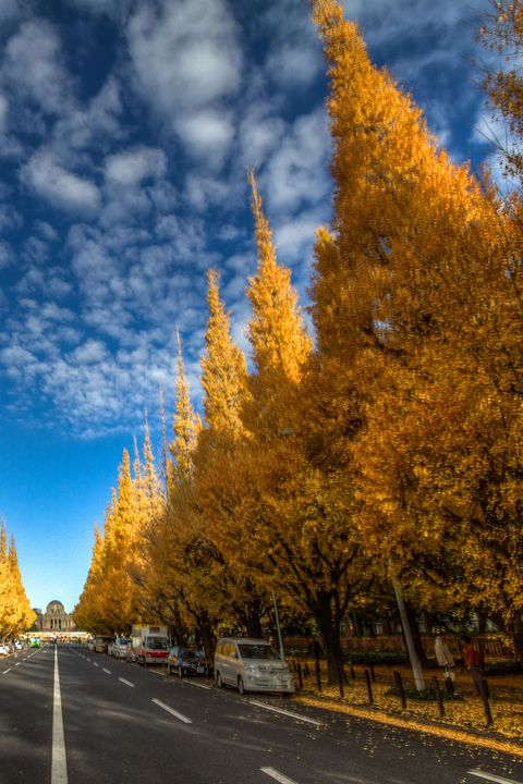 Tree, Sky, Yellow, Autumn, Leaf, Woody plant, Road, Daytime, Plant, Natural landscape,