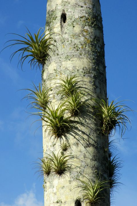 Low Angle View Of Air Plants On Palm Tree Against Sky