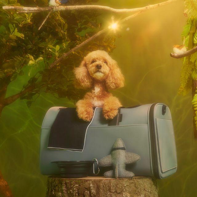 away travel pet carrier