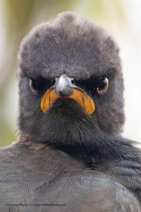 2021年「搞笑動物攝影獎」名單公布啦!氣噗噗的大鳥、蛋蛋的哀傷,46張令人噴飯的幽默照片