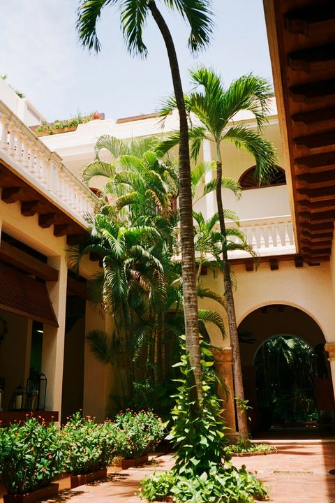 Tree, Property, Courtyard, Palm tree, Plant, Botany, Arecales, Architecture, Building, Hacienda,