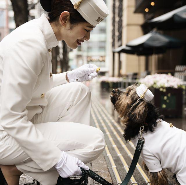 ザ・ペニンシュラ東京の「ドッグステイプログラム」