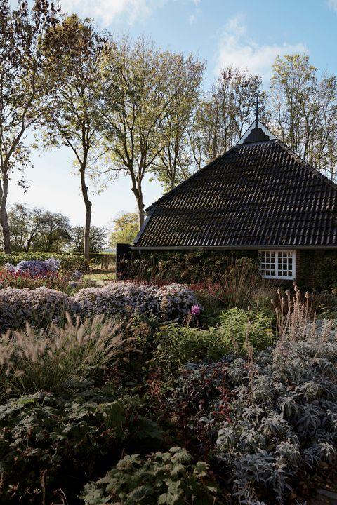Natural landscape, Tree, Spring, Botany, House, Sky, Plant, Architecture, Garden, Shrub,