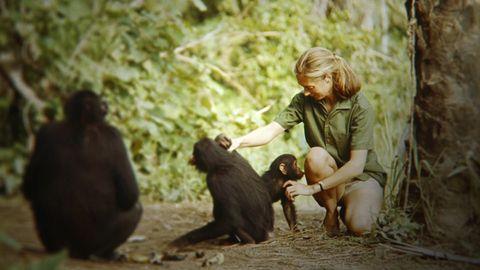 Primate, Adaptation, Common chimpanzee, Macaque, Human, Jungle, Organism, Wildlife, Sitting, Photography,