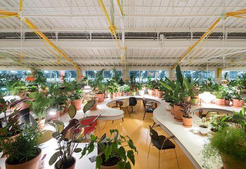 Flowerpot, Plant, Interior design, Ceiling, Interior design, Houseplant, Hall, Resort, Lobby, Beam,