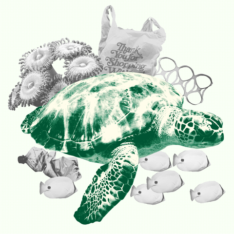 Sea turtle, Tortoise, Turtle, Green sea turtle, Kemp's ridley sea turtle, Reptile, Olive ridley sea turtle, Illustration, Drawing, Sketch,