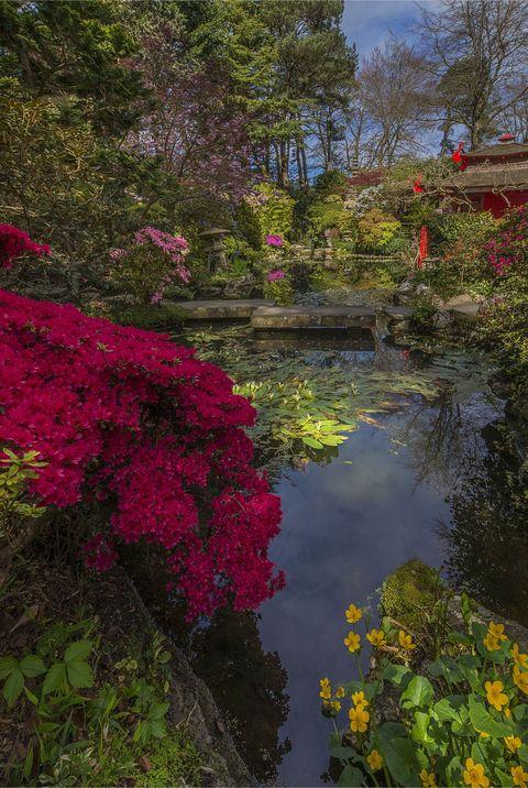 compton gardens es una de las atracciones más visitadas al sur de inglaterra