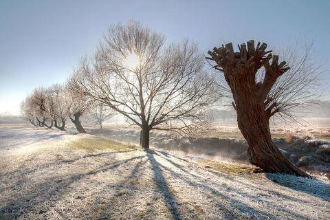 Winter, Tree, Snow, Natural landscape, Nature, Sky, Freezing, Atmospheric phenomenon, Frost, Morning,