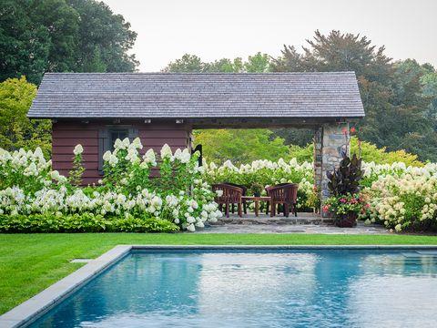 un muro de hortesias separa el jardín de la piscina