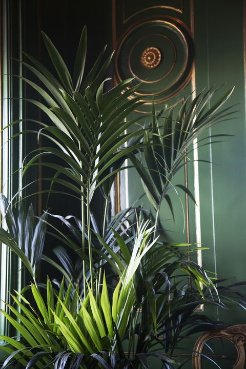 Palm leaves against green wall
