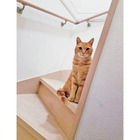 猫のポポくん(茶トラ)