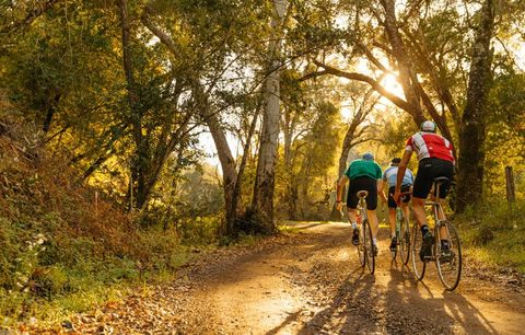 cyclists in golden sunlight