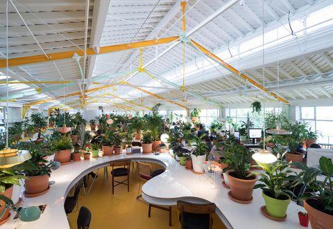 Flowerpot, Plant, Interior design, Ceiling, Interior design, Houseplant, Daylighting, Hall, Sun hat, Greenhouse,