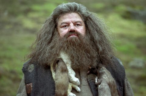 Hair, Beard, Facial hair, Human, Moustache, Long hair,