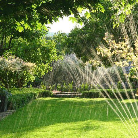 Green, Nature, Grass, Tree, Natural landscape, Lawn, Vegetation, Garden, Light, Leaf,
