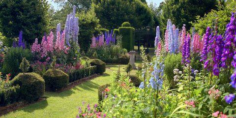 Flower, Flowering plant, Lupin, Plant, Garden, Foxtail lily, Shrub, Botany, Delphinium, Landscaping,