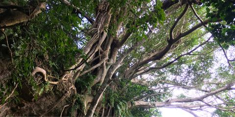 Tree, Vegetation, Branch, Nature reserve, Plant, Woody plant, Botany, Trunk, Root, Jungle,