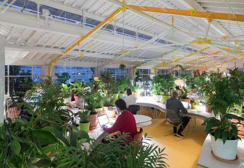 Plant, Flowerpot, Ceiling, Interior design, Houseplant, Interior design, Garden, Greenhouse, Daylighting, Hall,