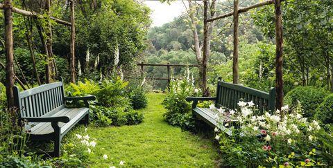 Nature, Natural landscape, Garden, Property, Vegetation, Tree, Nature reserve, Natural environment, Yard, Backyard,
