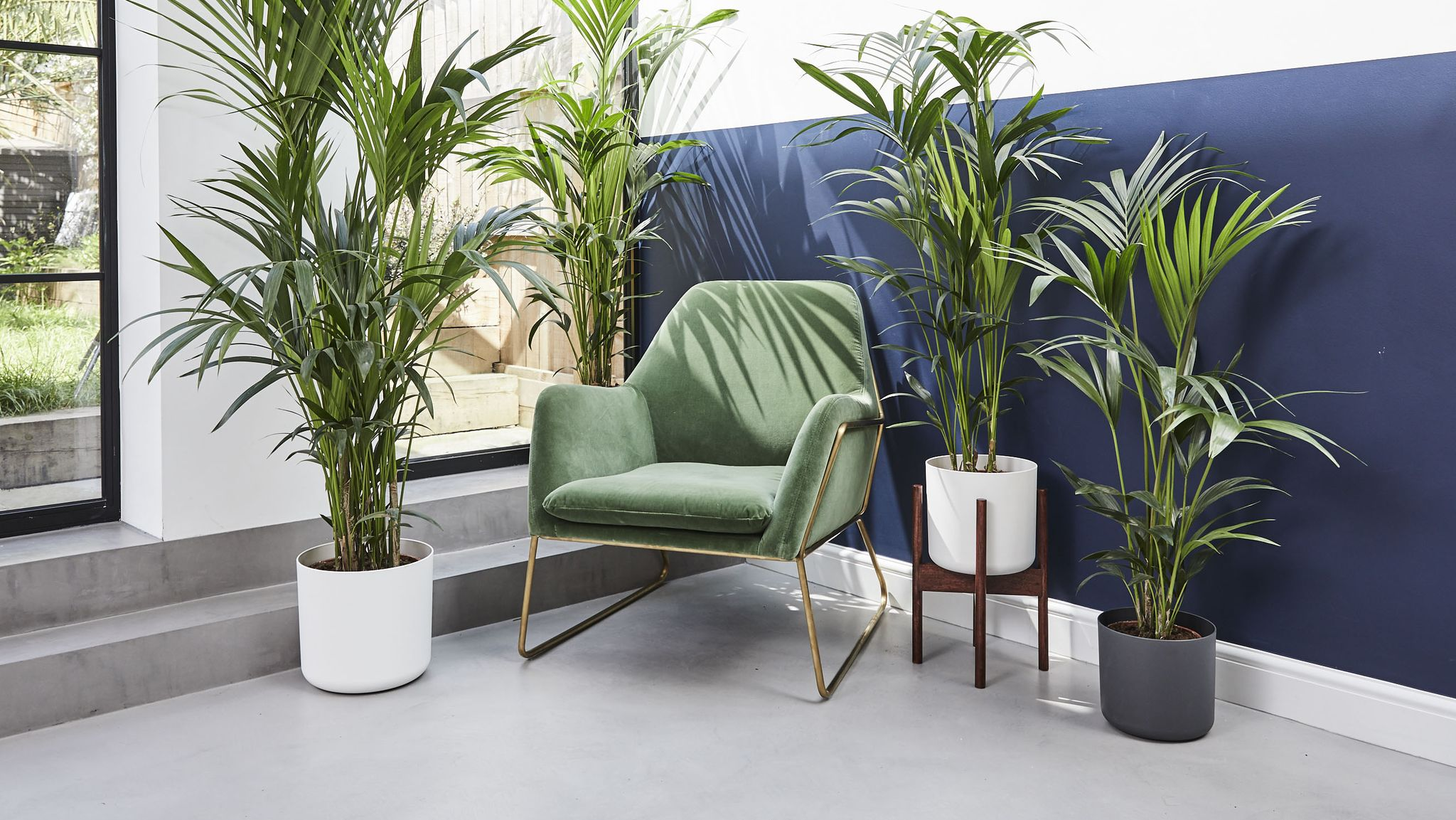 What's driving our obsession with indoor plants?