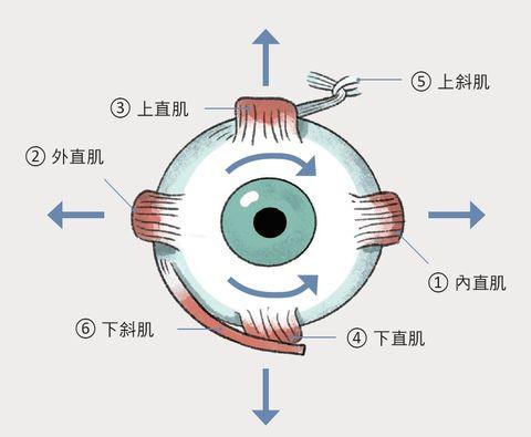 眼睛疲勞眼球乾澀眼球瑜珈舒緩眼睛痠痛