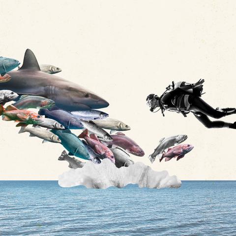 Shark, Great white shark, Cartilaginous fish, Marine mammal, Fish, Dolphin, Cetacea, Lamniformes, Animation, Lamnidae,
