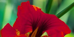 ONE-MINUTE HEALTH ADVICE: red flower