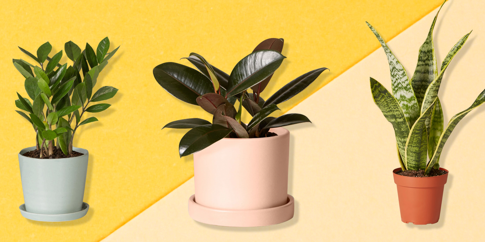 10 Best Air-Purifying Plants For A Healthier Home, According To Experts
