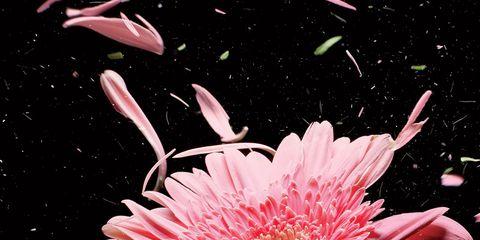 ALLERGY HELP: pink flower