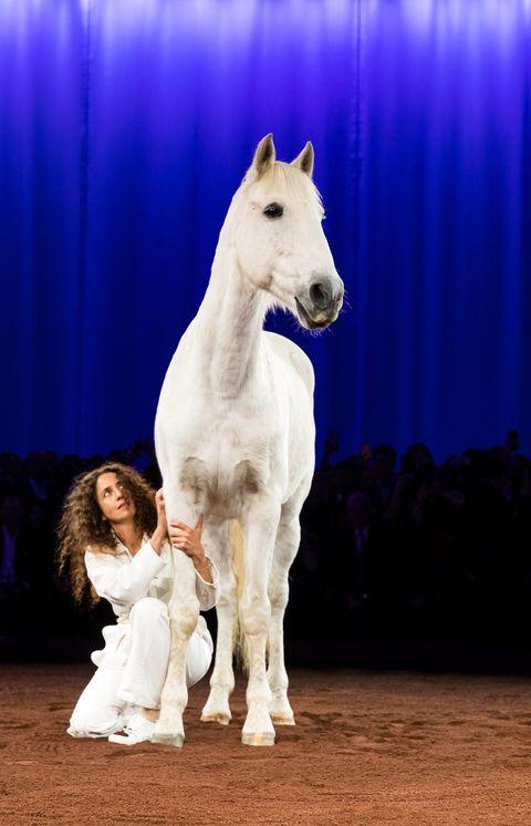 Mammal, Vertebrate, Horse, Stallion, Mare, Mane, Sky, Livestock, Mustang horse,