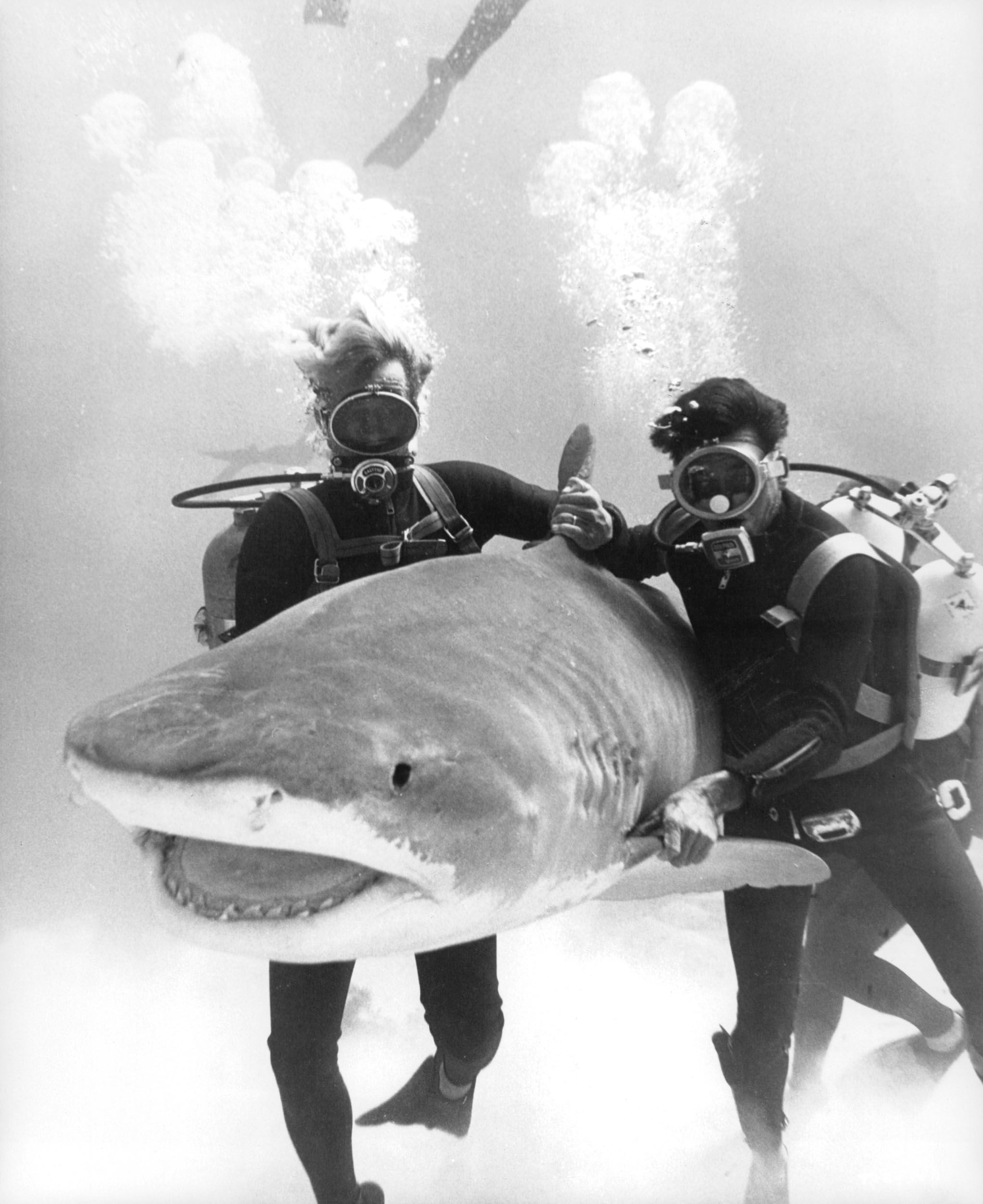 Actors underwater with a shark in a scene from the film Thunderball.