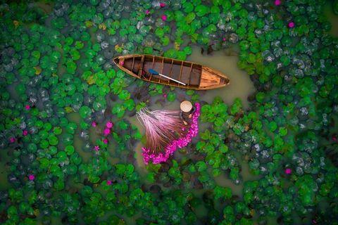 Green, Organism, Leaf, Grass, Tree, Plant, Wildlife, Shrub, Insect, Art,