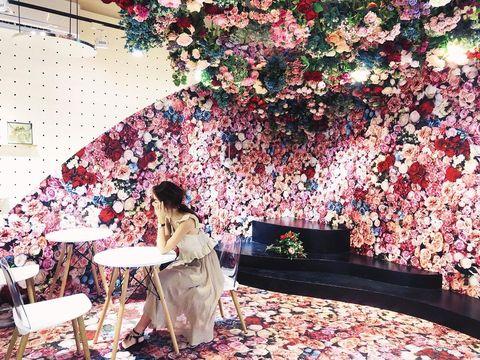 Spring, Pink, Blossom, Flower, Petal, Room, Wallpaper, Plant, Dress, Textile,