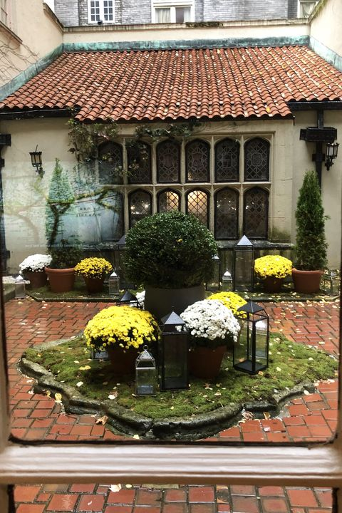 Window, Botany, Plant, Flower, Courtyard, Houseplant, Flowerpot, Building, Floristry, Garden,