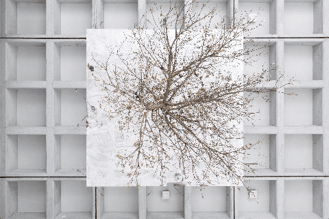 White, Branch, Tree, Twig, Wall, Window, Architecture, Line, Room, Woody plant,