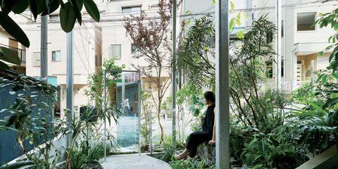 Neighbourhood, Urban area, Home, Tree, House, Window, Architecture, Building, Residential area, Cat,