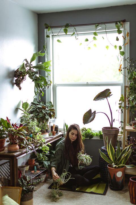 屋内で育てることができる最高の熱帯植物