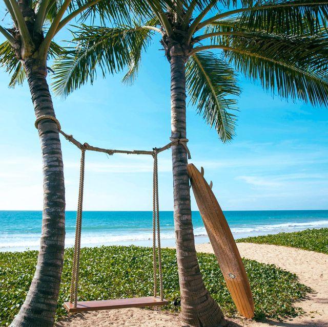 Tree, Palm tree, Tropics, Sky, Blue, Arecales, Sea, Vacation, Beach, Ocean,