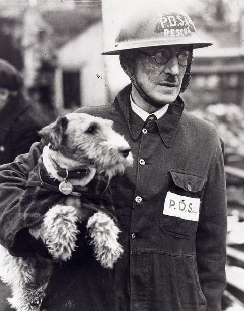dogs second world war