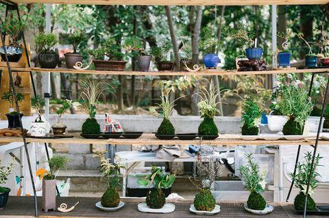 Houseplant, Green, Flowerpot, Plant, Glass bottle, Bottle, Herb, Tree, Garden, Glass,