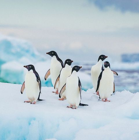 Facts About Penguins