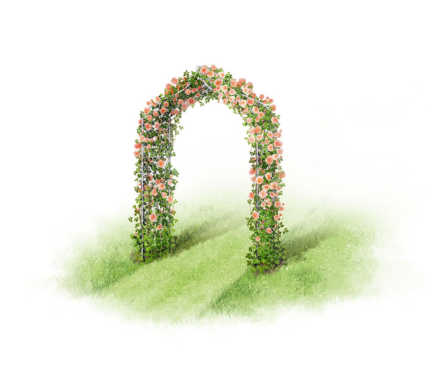 Garden arch illustrations - decorative metal arch