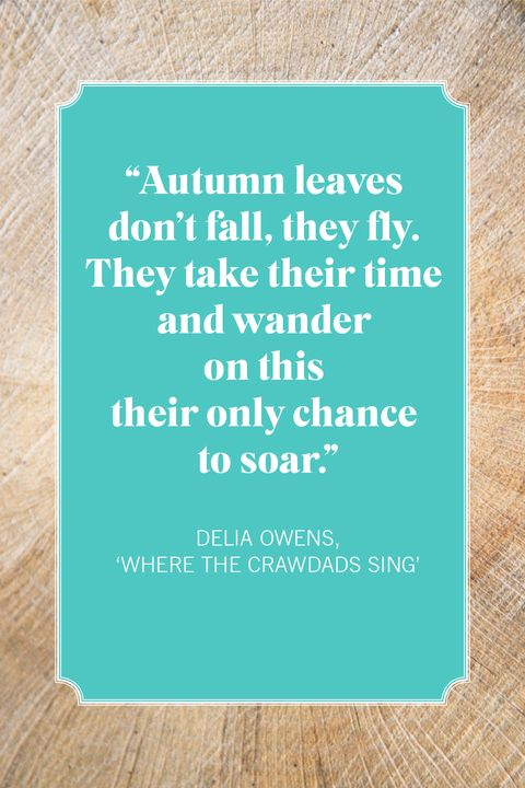 fall quotes  delia owens, 'where the crawdads sing'