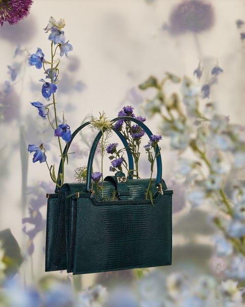 Blue, Lavender, Flower, Cobalt blue, Plant, Purple, Spring, Flowering plant, Lavender, Bellflower,