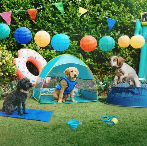 pets at home dog cooling range