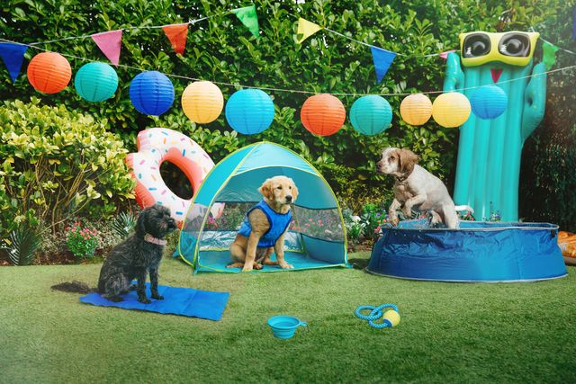 pets at home summer dogs