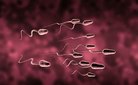 strengthen sperm
