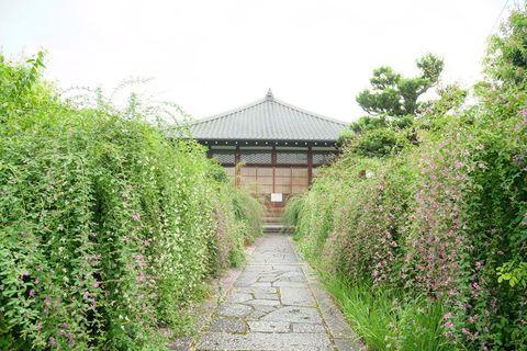 夏の終わりに不順な天気が続く京都ですが、萩の花が咲き始めました。萩の寺として知られる常林寺では特別公開が始まっています。   期間:開催中〜9月28日土 *但し20日21日は拝観休止 時間:10時〜16時 *但し日曜日は13時〜16時 料金:500円