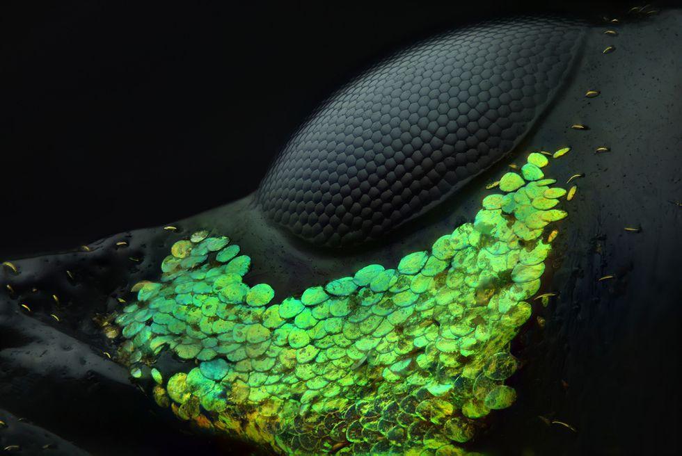 👏 20 grandes fotos microscópicas que no puedes dejar de ver